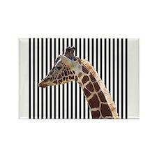 Giraffe on Black and White Stripes Magnets