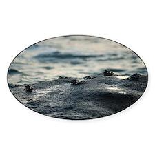 Intertidal marine crabs Decal