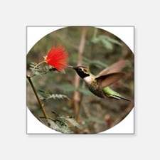"Humming Bird with a Red Flo Square Sticker 3"" x 3"""