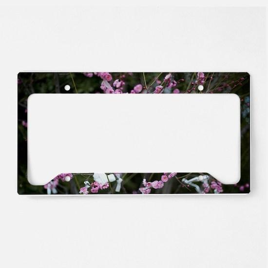 Omikuji Cherry Blossom License Plate Holder
