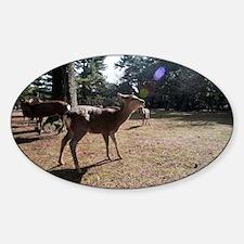 nara deer Decal