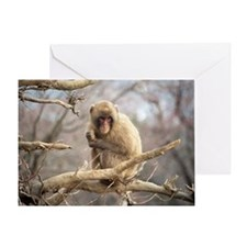 tree monkey Greeting Card