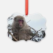 monkey in a tree Ornament