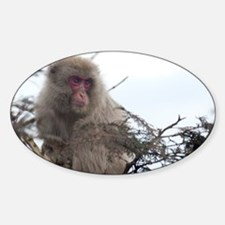 monkey in a tree Decal