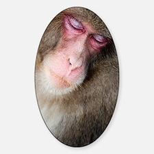 sleeping monkey Decal