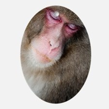 sleeping monkey Oval Ornament