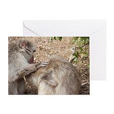 monkey groom Greeting Card