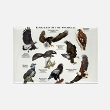 Eagles of the World Rectangle Magnet