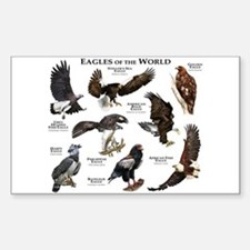 Eagles of the World Decal