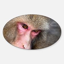 monkey eyes Decal