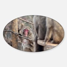 angry monkey Decal