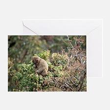 tree monkey Greeting Card