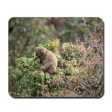 tree monkey Mousepad