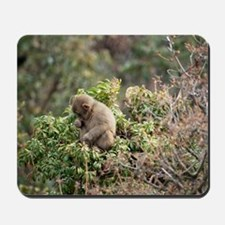 tree monkey Mousepad