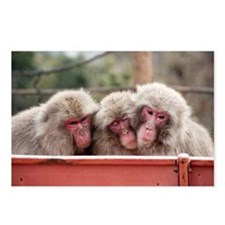 monkey trio Postcards (Package of 8)