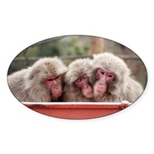 monkey trio Decal
