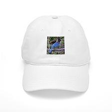 Steller's Jay on Branch Baseball Cap