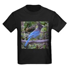 Steller's Jay on Branch T