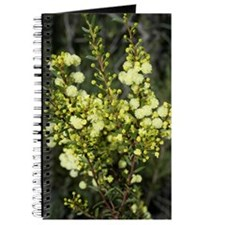 wattle flowerheads Journal