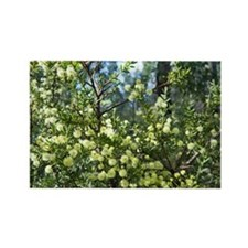 flowering wattle Rectangle Magnet