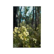 wattle flowers Rectangle Magnet