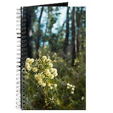 wattle flowers Journal