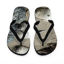 three sleepy seals Flip Flops