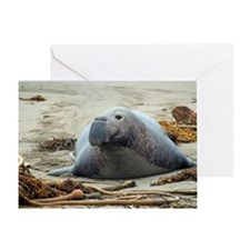 large elephant seal Greeting Card