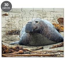 large elephant seal Puzzle