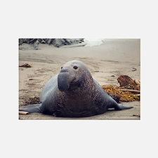 elephant seal on a beach Rectangle Magnet