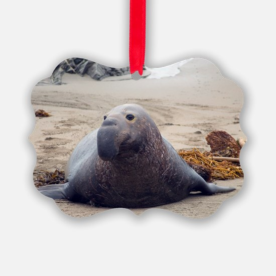 elephant seal on a beach Ornament