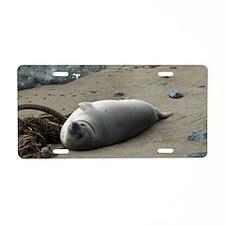 grey seal Ano Nuevo Aluminum License Plate