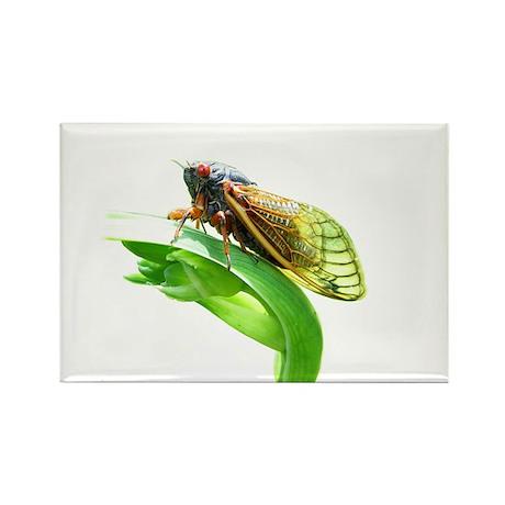 cicada_tee_10x10_nologo Magnets