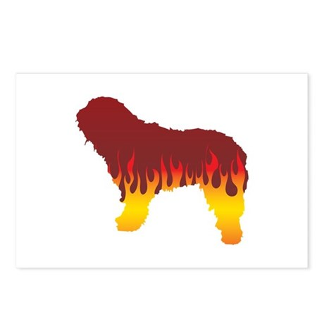 Bergamasco Flames Postcards (Package of 8)