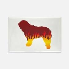 Bergamasco Flames Rectangle Magnet (100 pack)