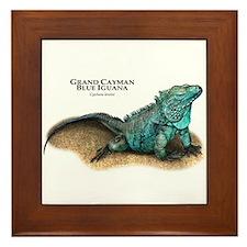 Grand Cayman Blue Iguana Framed Tile