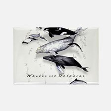 Whales  Dolphins Magnets