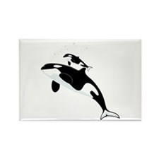 Killer Orca Whales Magnets