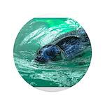 Swimming Seal 3.5