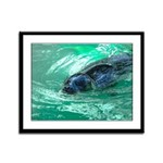 Swimming Seal Framed Panel Print
