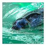 Swimming Seal Square Car Magnet 3