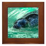 Swimming Seal Framed Tile
