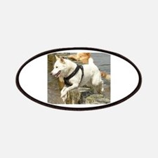 Canaan_Dog in water Patches