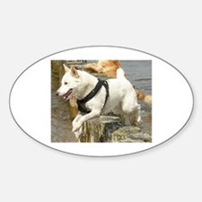 Canaan_Dog in water Decal