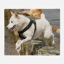 Canaan_Dog in water Throw Blanket