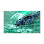 Swimming Seal Car Magnet 20 x 12
