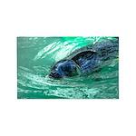 Swimming Seal 3'x5' Area Rug