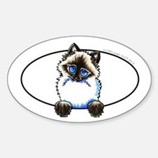 Ragdoll Snowshoe Cat Peeking Decal