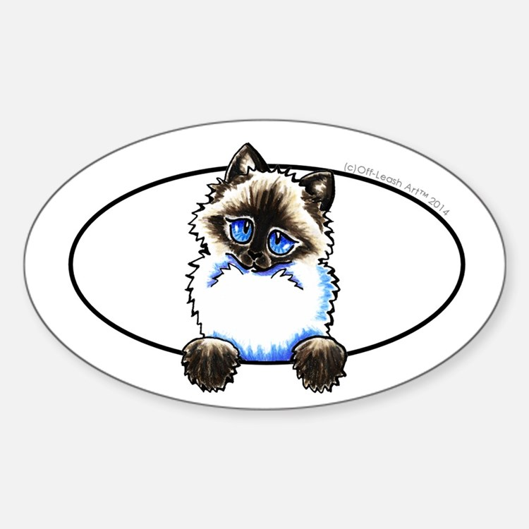 Ragdoll Snowshoe Cat Peeking Decal
