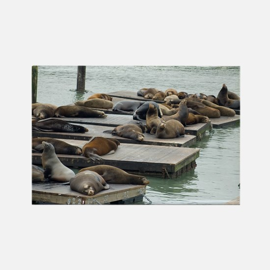 seals at fishermans wharf Rectangle Magnet